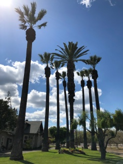 Palm Trees Next To Our House