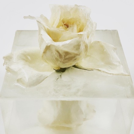 YellowHums Rose reflection Art 2